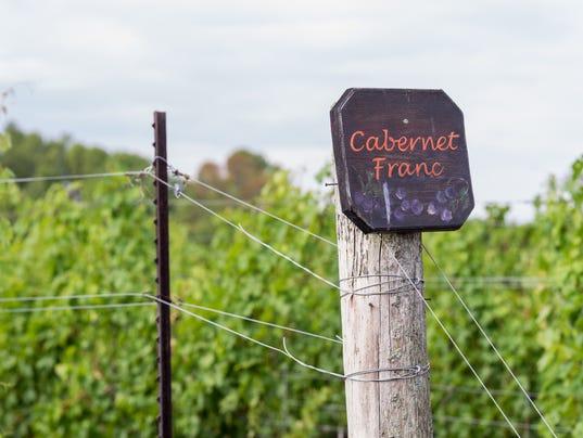 Cabernet Franc grape vines fresh after the summer rain.