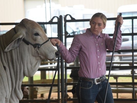 Faith McVay, 16, a homeschooled student with the Rapides Parish 4-H, won in her division with a Brahman bull at the Central District Livestock Show held Saturday at the Dewitt Livestock Facility near LSUA. The annual 4-H Parish and Central District Livestock Shows were held Thursday through Saturday. Rodney Johnson, district show manager, said over 200 students from seven parishes showed at the event.