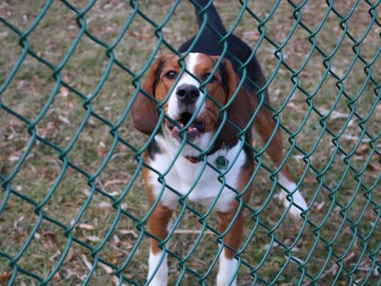 South Burlington Dog Park