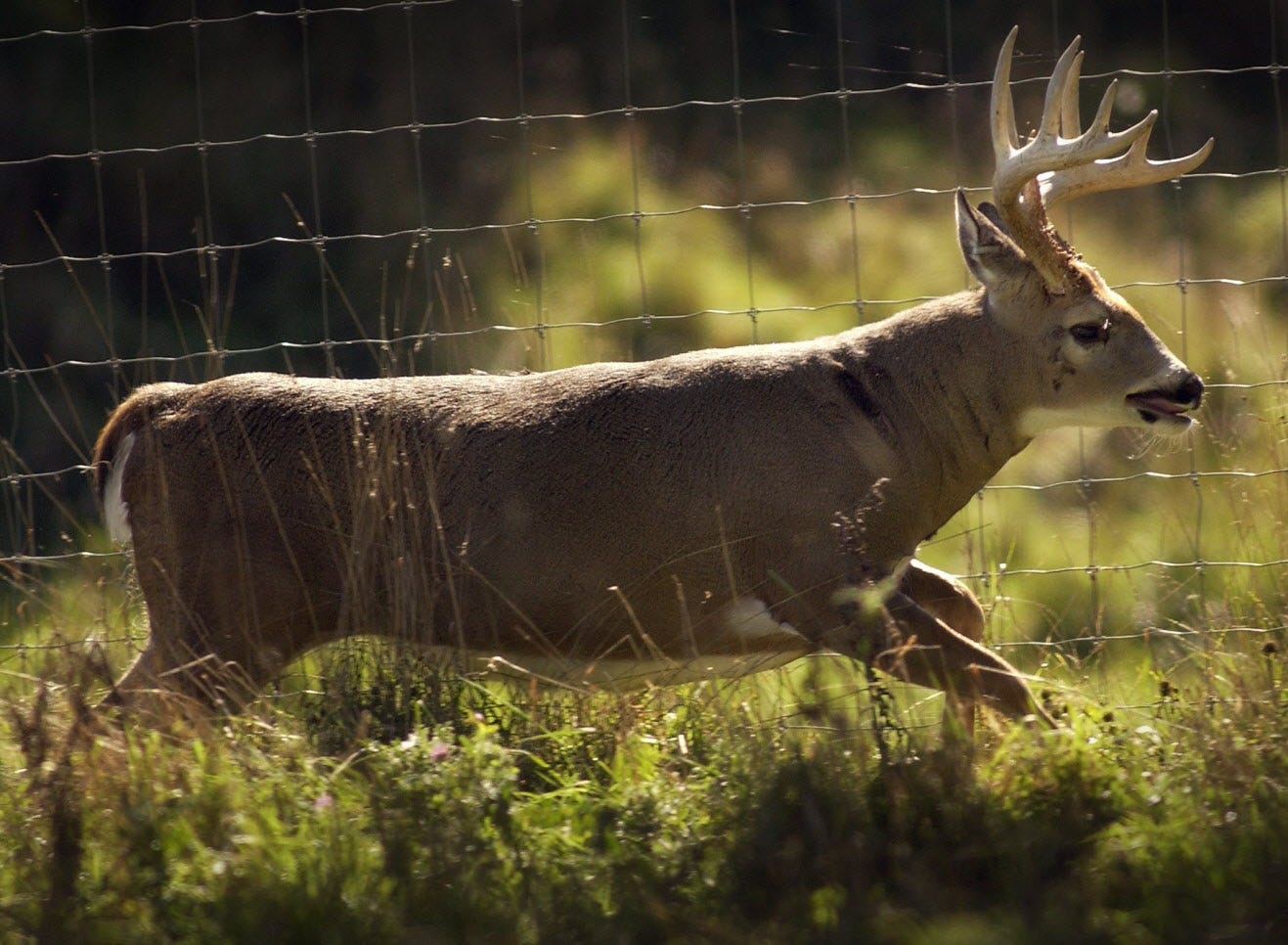 How to activate deer in World of Tanks