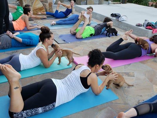 636652591839079545-Dog-Yoga-3.jpg