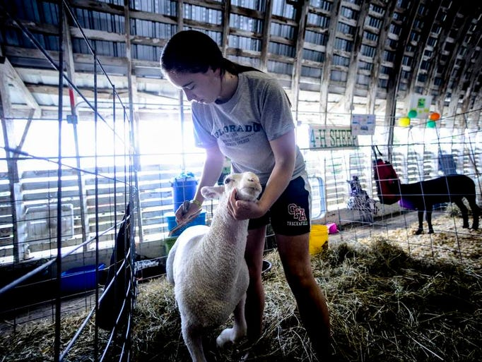 Billy Robinson, of Owego, grooms her market lamb in preparation to show it during the 155th annual Tioga County Fair on Thursday, June 10.