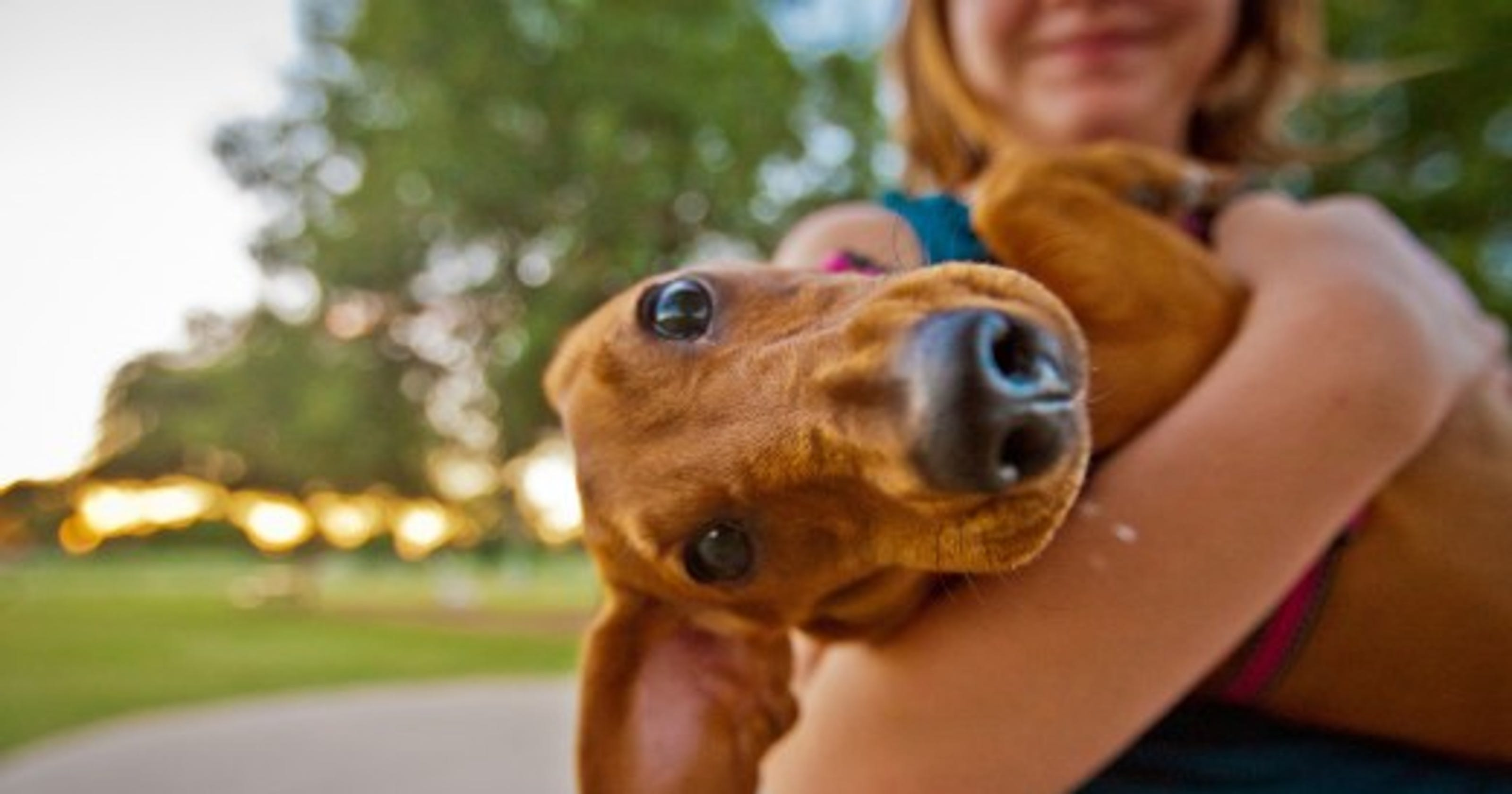 Dog Friendly Parks In Phoenix