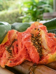 A ripe papaya, split open to show the sweet orange flesh within, can be seen with younger, green papayas on display at the Guam Department of Agriculture in Mangilao on Friday, Jan. 8.