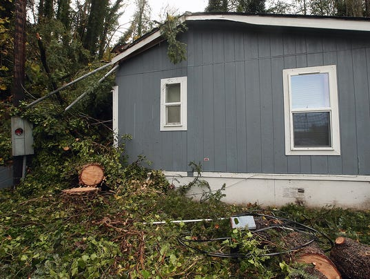 PO-Tree-Into-House-Clean-Up04.JPG