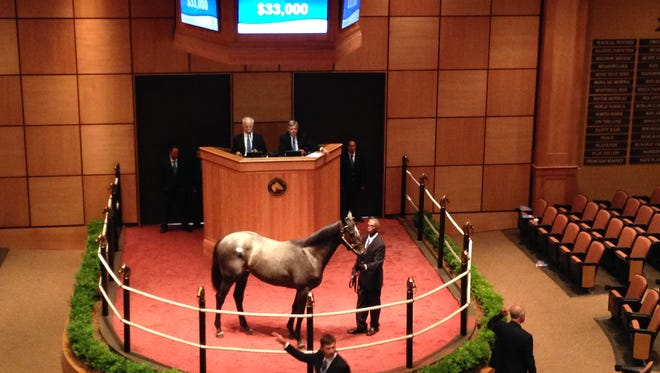 One of the first offerings at the Fasig-Tipton Kentucky July Yearling Sale goes through the auction ring as one of the thoroughbred sales market's most important sectors begins its annual run.