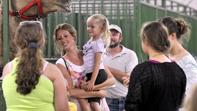 People enjoy getting close to a camel at the 2013 Lamafest and Alpaca Showcase. The 2014 edition comes to the MSU pavilion this weekend.