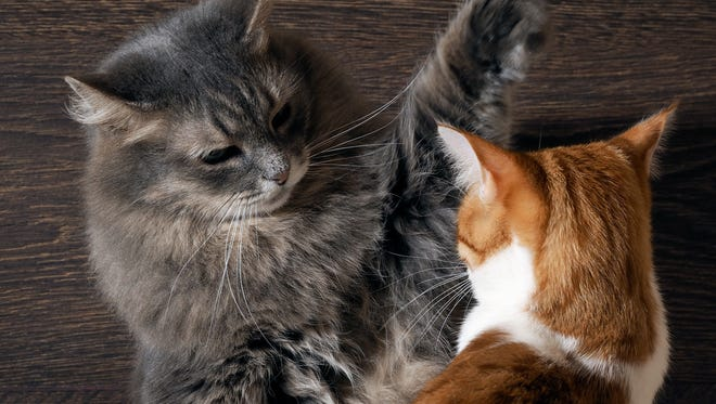A talk about feline aggression is set for April 13 at the Willamette Humane Society.