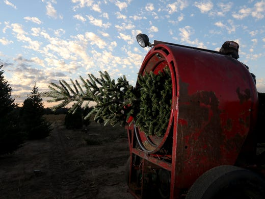 Tradition Keeps Wisconsin Christmas Tree Lots In Business