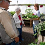 Aileen Johnson looks over the tomato offerings on Thursday at the Brewer Greenhouse on Don Rovin Lane in Farmington.