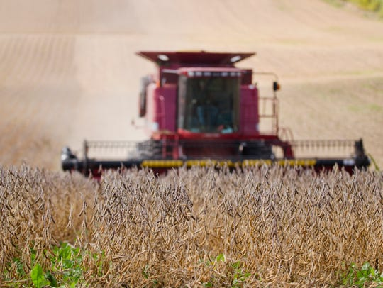 File - Dale Wagner, 55, harvests soy bean on his field at the interesction of State 42 and Borgwardt Lane.