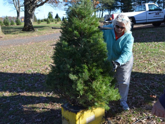 Leslie Hurley of Airport Tree Plantation places a small