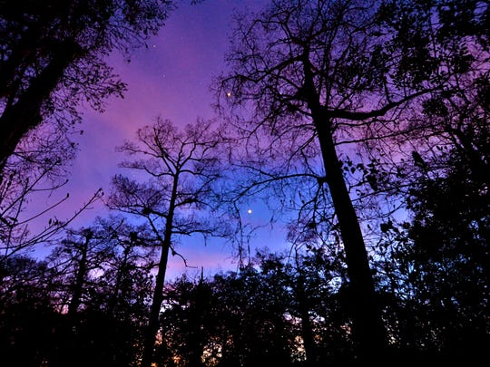 Corkscrew Swamp Sanctuary & Blair Audubon Center's monthly After Hours is Jan. 22 in Naples