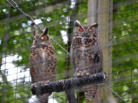635933099977177671-cypress-grove-owls.jpg