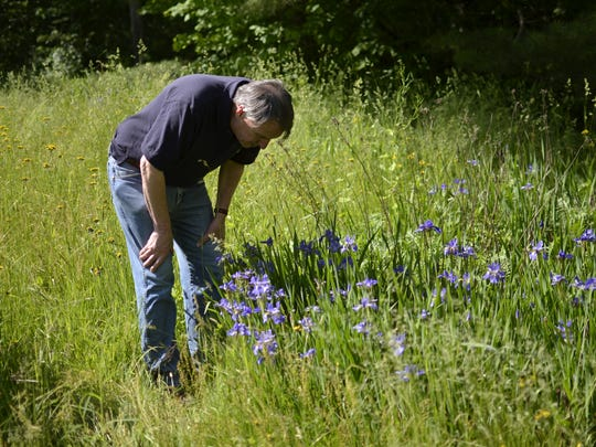 Democratic gubernatorial candidate Peter Galbraith stops to smell the flowers on property surrounding his home in Townshend on Monday, June 6, 2016.