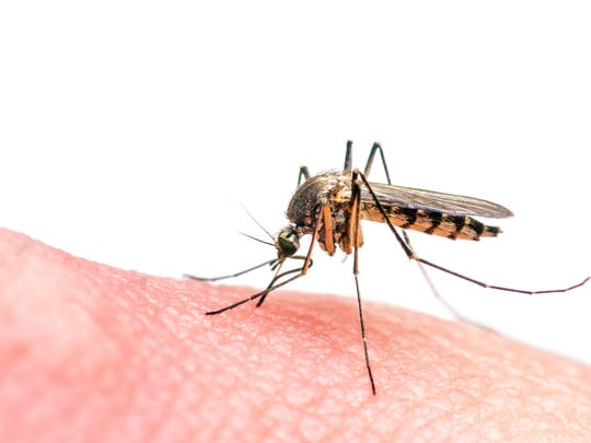 A horse from Hamburg contractedEastern Equine Encephalitis (EEE),the Michigan Department of Agriculture and Rural Development (MDARD) confirmed in a press release.