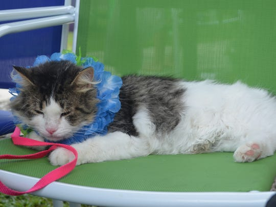 Narwhal, who lives in a foster home and is available