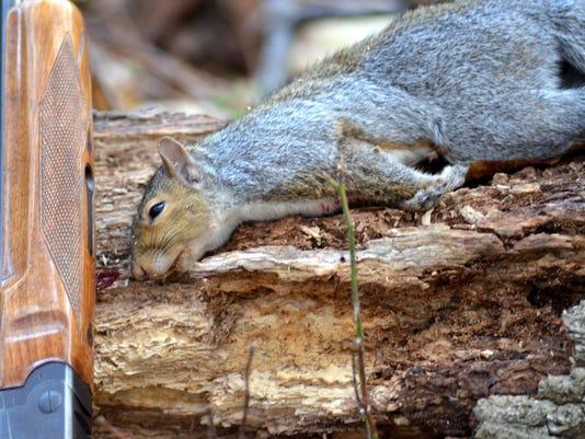 636144106247929180-LDN-DW-111316-gray-squirrel.jpg