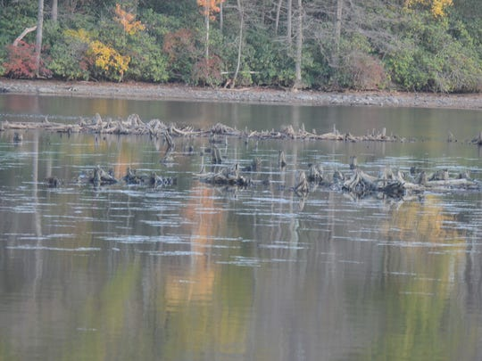 The 2016-17 drawdown of Greenwood Lake exposes typically submerged stumps that pose hazards to recreational boating and swimming.