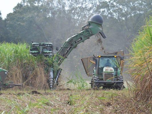 636199133229965098-cane-harvest-on-Vallot-Farmsjpg.jpg