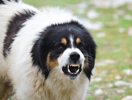 Ask Amy Angry Dog