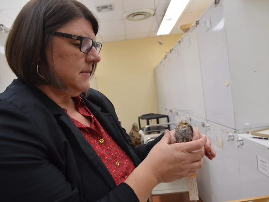 Dr. Marcy Brown Marsden, dean of MSU's College of Science & Mathematics, displays one of the birds in MSU's collection of more than 860 birds. Marsden has studied birds on Alcatraz Island, in Dallas and in Alaska.