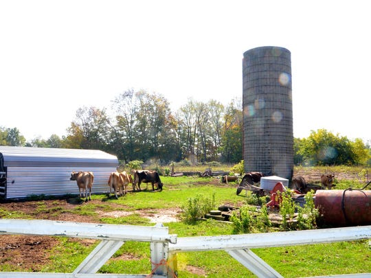 Dan Hiday, the owner of Hiday Farm, started looking
