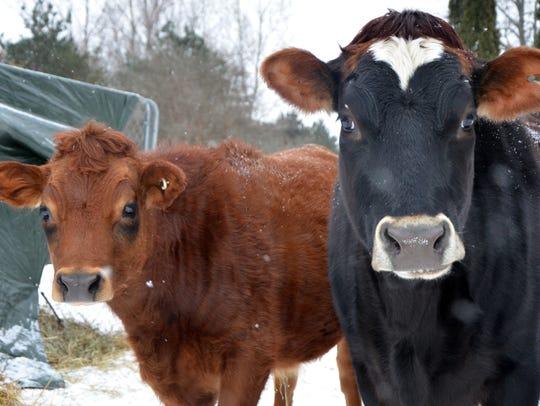 Fauna Animal Sanctuary in Battle Creek takes in farm