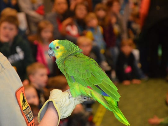 'Stevie,' a blue-fronted Amazon parrot, at Willard