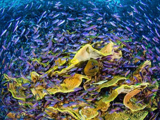 """Moray Eel,"" photographed by Bob Halstead"