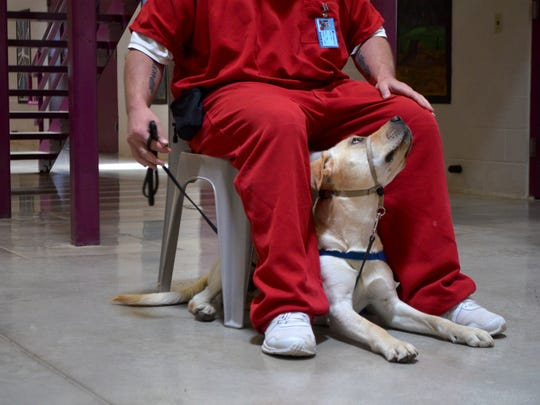 Olaf permorms tricks for his trainer at Crossroads Correctional Center, where inmates train service animals later donated to people with special needs.