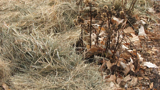 One of the best blanket covers to protect perennials, strawberries and landscape plants from cold temperatures is winter mulch.
