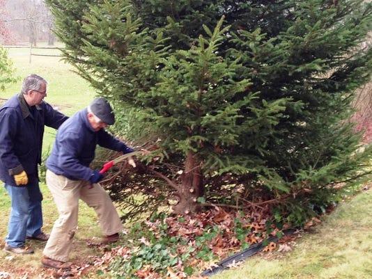 ELM 1130 ARCTIC LEAGUE TREE 01