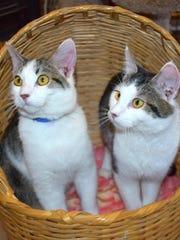 Oatmeal Raisin and Simoa are available for adoption