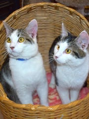 Oatmeal Raisin and Simoa are available for adoption at 11129 Michigan Ave. in Youngtown. They must be adopted together. For more information, call 623-773-2246 after 10 a.m.