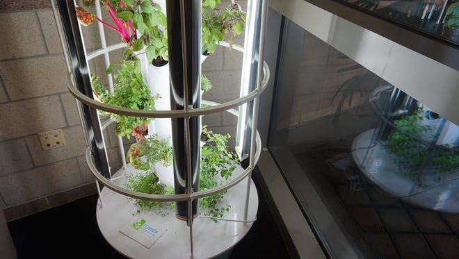 Tower gardens can be found all over the UCF campus, growing fresh produce. The gardens are a collective effort among the Arboretum, student government, Health Services and the campus gym.