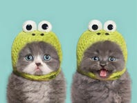 Cat videos are the best. CatVideoFest binge event in Ann Arbor is even better.