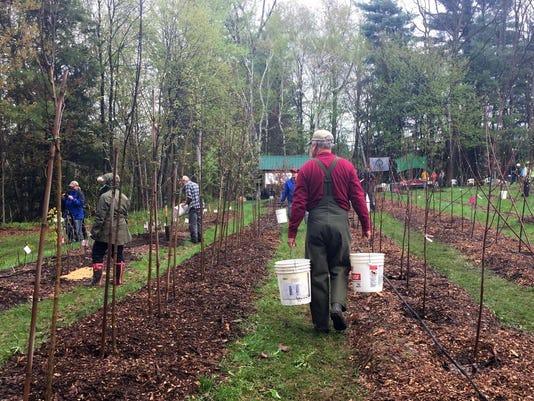 636296738084681166-BUR20170506-tree-planting-18