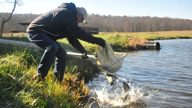 James Zehringer, director of the Ohio Department of Natural Resources, dumps a net full of rainbow trout into a pond at Malabar Farm State Park.