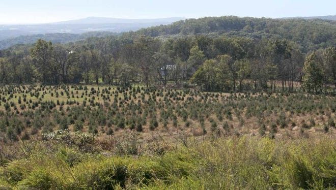The Charlie Brown Christmas Tree Farm in Holland Township has been preserved by the Hunterdon Land Trust.