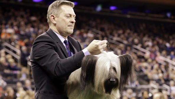A handler carries Charlie, a Skye terrier, to the judging