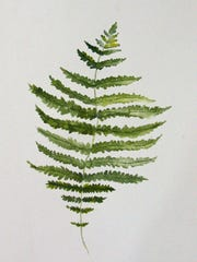 New York fern is easily recognized as the frond tapers