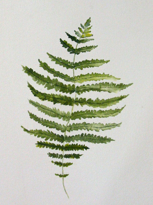 Nature-Journal-NY-Fern-Image.jpg