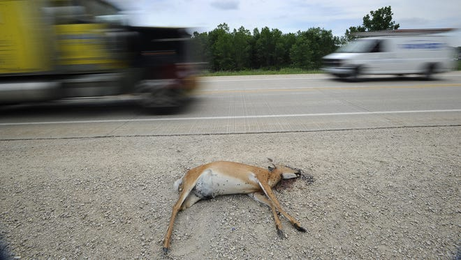 A dead deer on the shoulder of U.S. 151 near Fond du Lac.