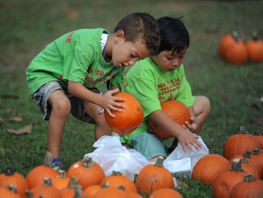 -TCL pumpkin 01.jpg_20141010.jpg