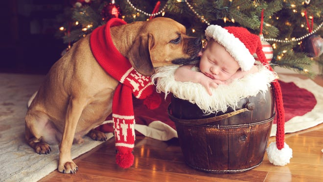 Newborn photo shoots around the holidays can be used for your Christmas cards. Get the entire family involved, even your pets.