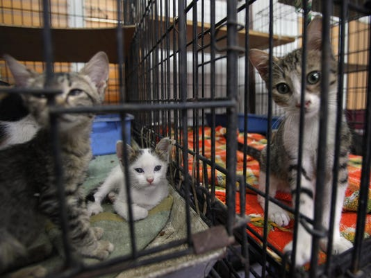 Holiday Season Sees Rise In Abandoned Pets