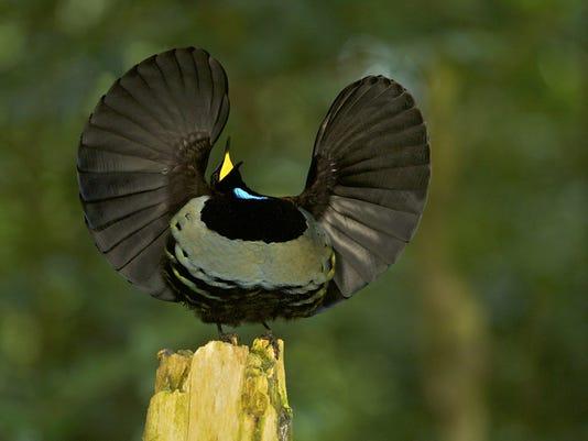 FEA bird.jpg