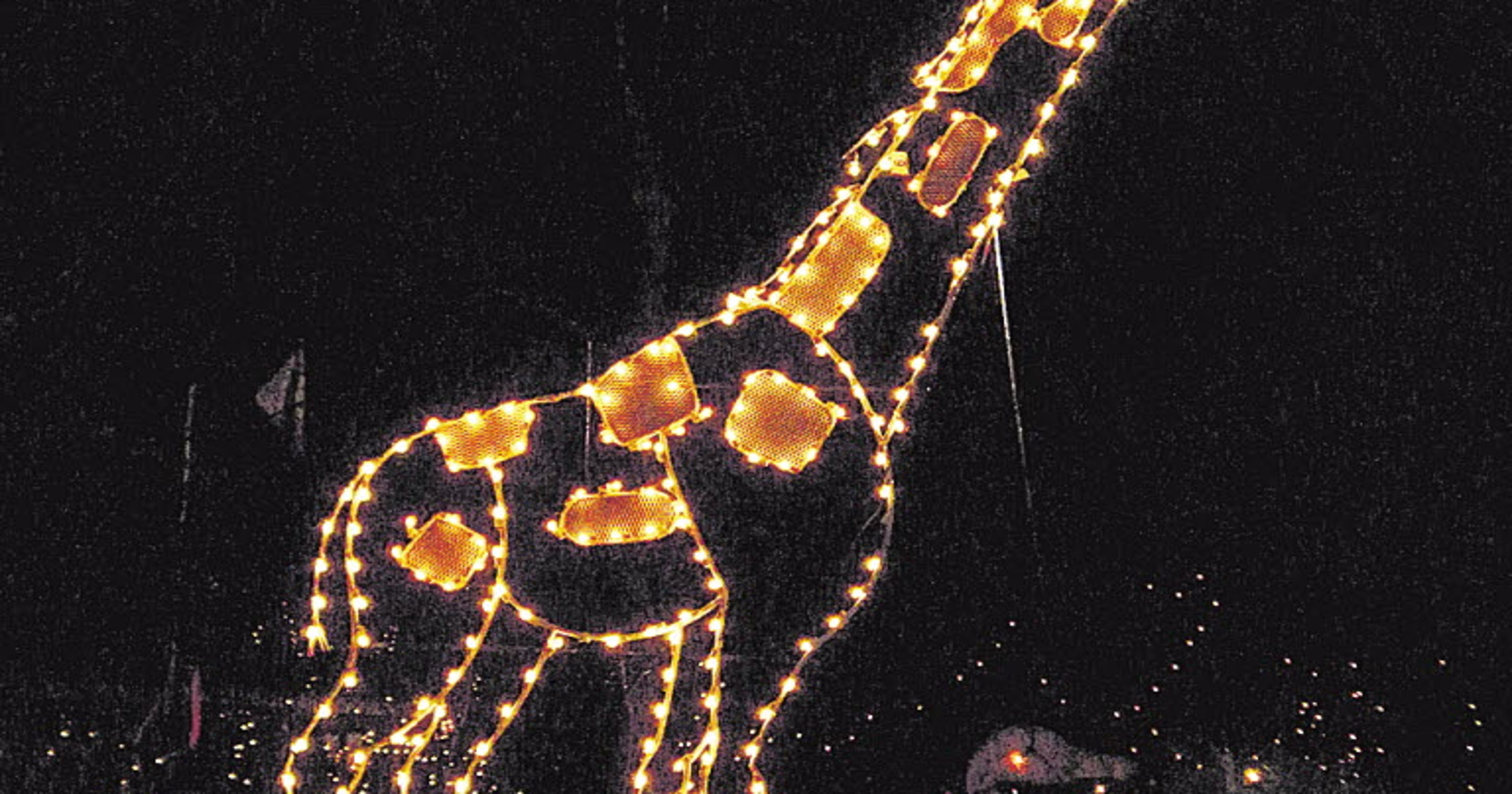 Turtle Back Zoo Christmas Lights 2019.Holiday Bucket List Fun And Unique Winter Activities In