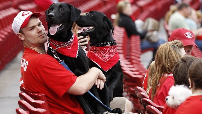 Cincinnati Reds fans Scott Schear of Dayton hangs on to his dogs Felix, left, and Otto while at Great American Ball Park for Bark in the Park last year.